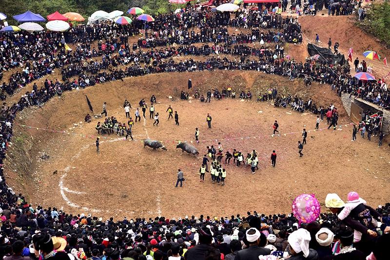 贵州从江千年斗牛文化