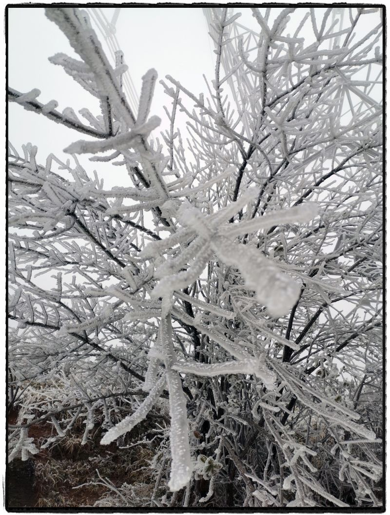 1月8日,海拔2200米,零下3.7摄氏度,滇东北大地云里雾里冰里。(周利奎 刘艳娇)