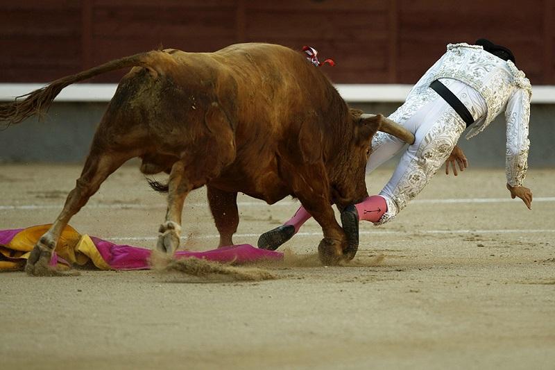 斗牛士惨遭公牛刺穿臀