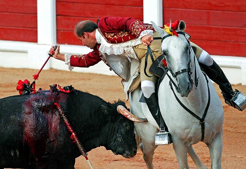 斗牛士在猛烈刺牛