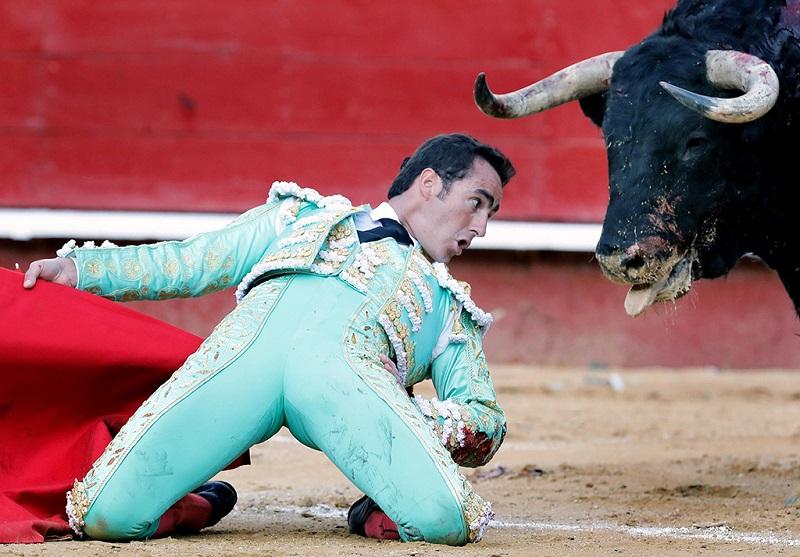 西班牙斗牛士与牛