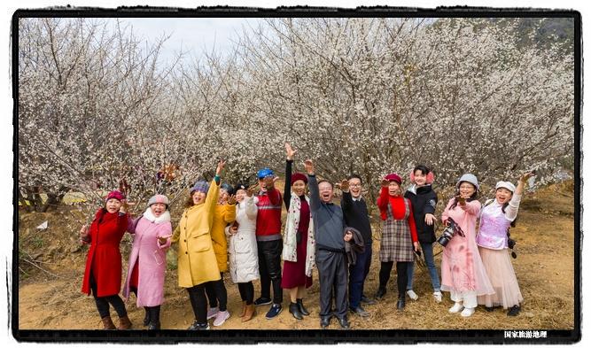 3、2021年1月13日,游客在苍梧县狮寨镇古东村欣赏雪白的青梅花并留影(何华文)