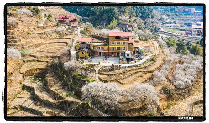 9、2021年1月13日,航拍广西苍梧县狮寨镇古东村森木组雪白梅花与村民房子构成一幅美丽画卷。(何华文)