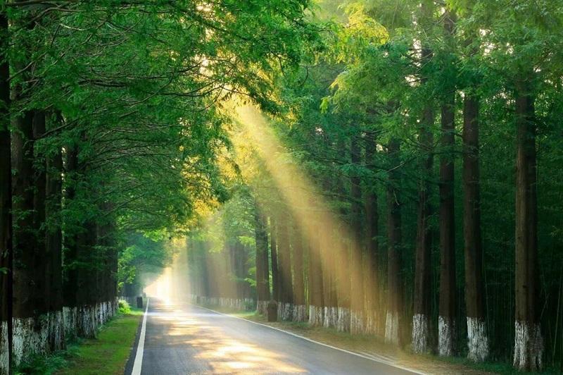 绿色生态盐城-黄海森林公园内