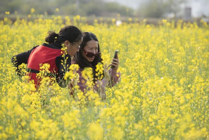1、2月20日,游客在广西梧州市万秀区夏郢镇思良江油菜基地游玩。(何华文)