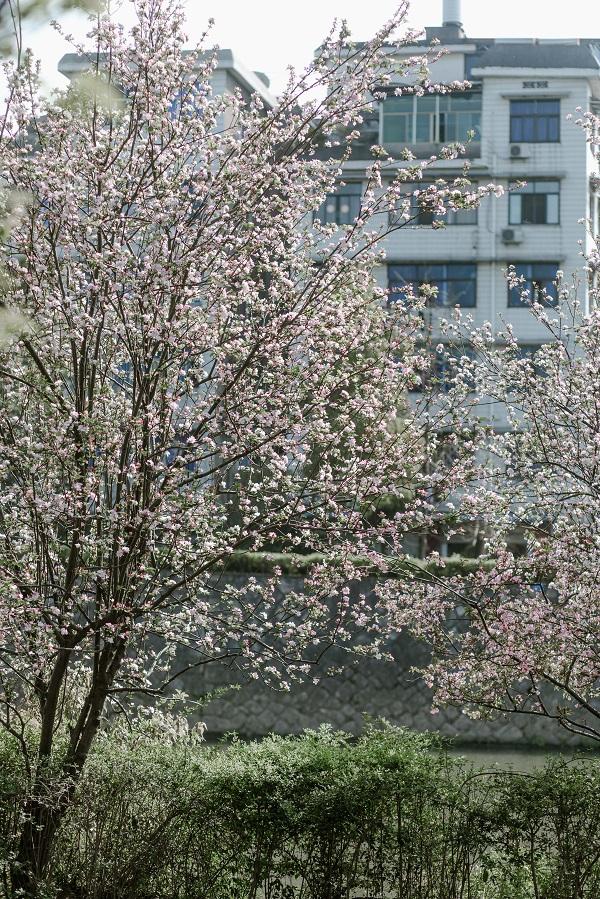 繁花似锦春满园