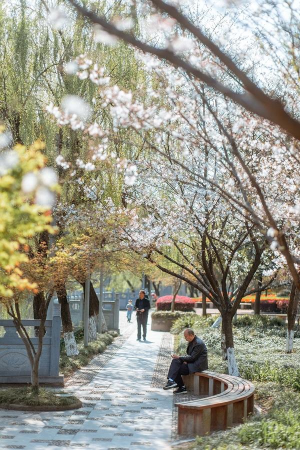 花开之时,如云似霞。公园成为市民的赏花休闲好去处