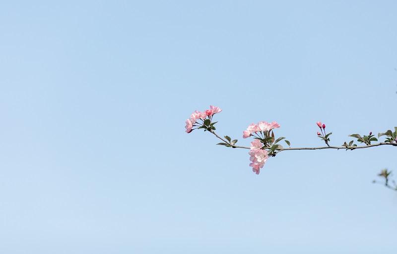 樱花迎春到