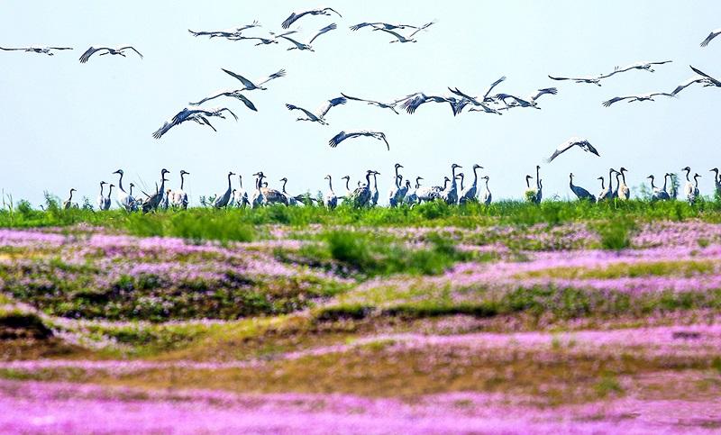 鸟儿的天堂-鄱阳湖