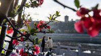 秦巴山区的陕西省安康市春暖花开