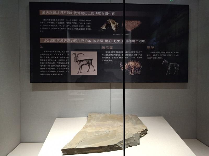 动物骨骼化石