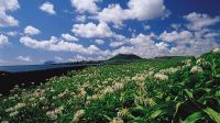 春暖花开济州岛(图)