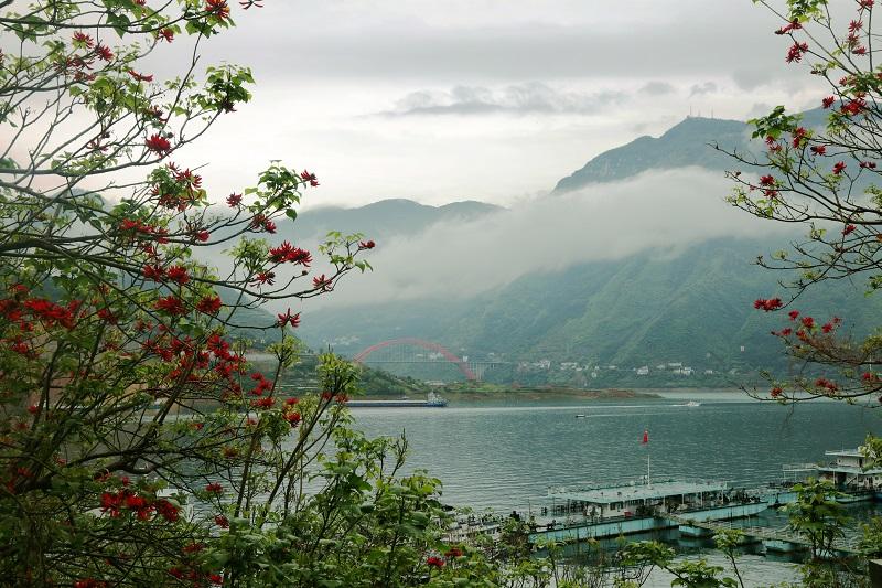 图2:巫山彩龙腾飞平湖港区成壮景。唐探峰摄