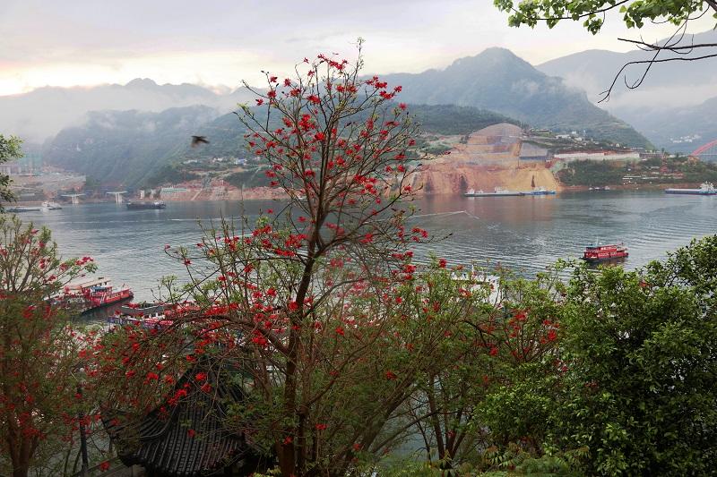 图5:巫山大宁湖港区花树映碧湖成美画。唐探峰摄
