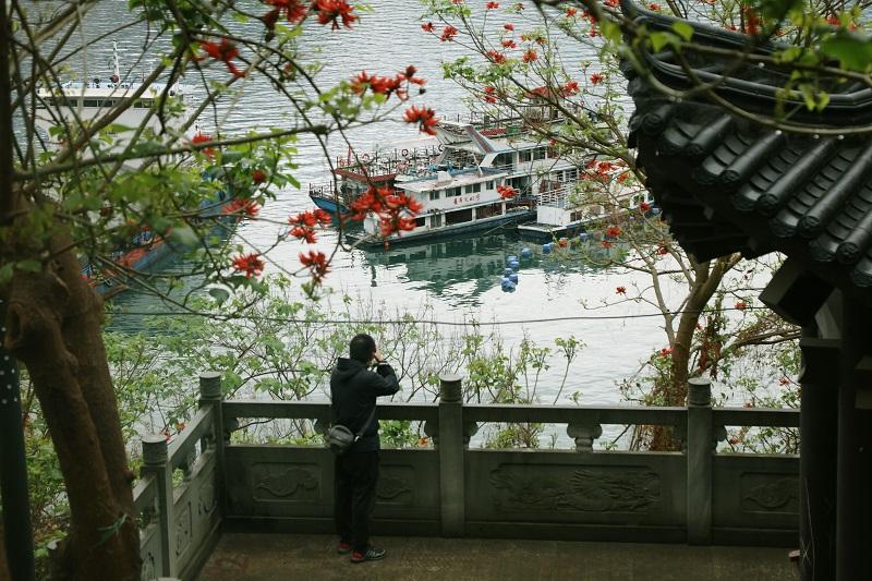 图7:长江上游新闻记者刘润在巫山美丽港区摄影采访。唐探峰摄