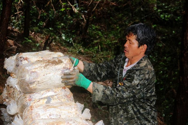 2021年3月28日,贵州省从江县加勉乡党扭村一农户在在林下堆放林下灵芝菌包