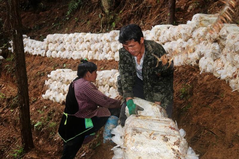2021年3月28日,贵州省从江县加勉乡党扭村种植户在堆放林下灵芝菌包