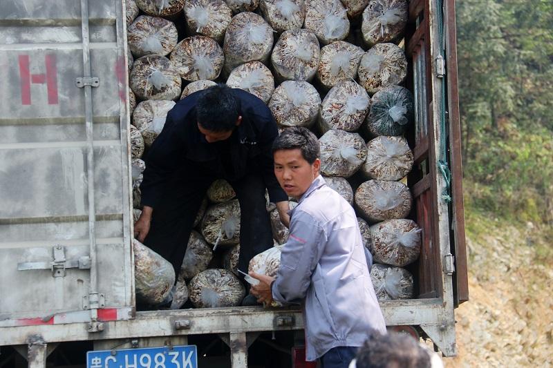 2021年4月1日,贵州省从江县加勉乡污俄村村民在卸灵芝菌包