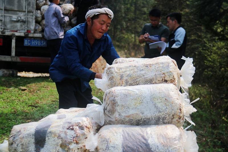 2021年4月1日,贵州省从江县加勉乡一农户在卸灵芝菌包