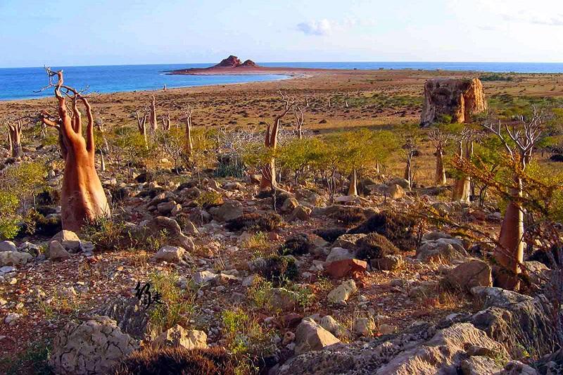 荒凉的索科特拉岛