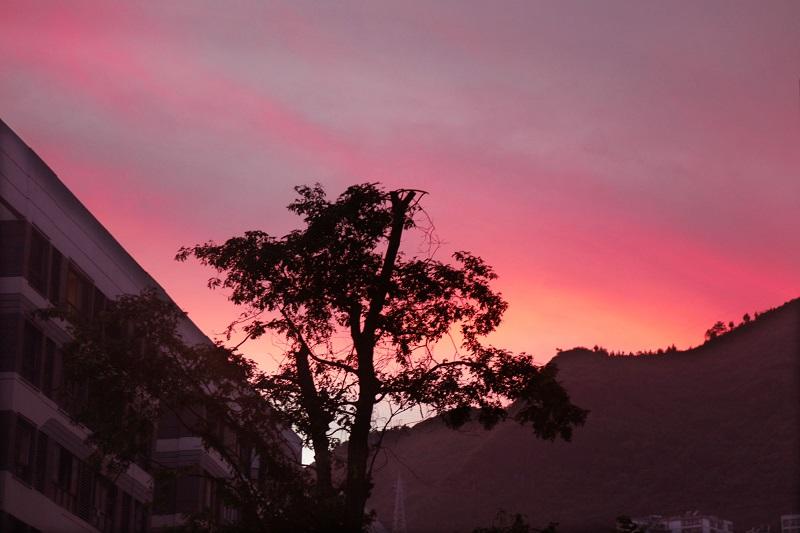 图5:绿树夜舞彩霞。2021年7月8日旁晚,唐探峰摄于巫山县城龙门街道聚鹤社区。
