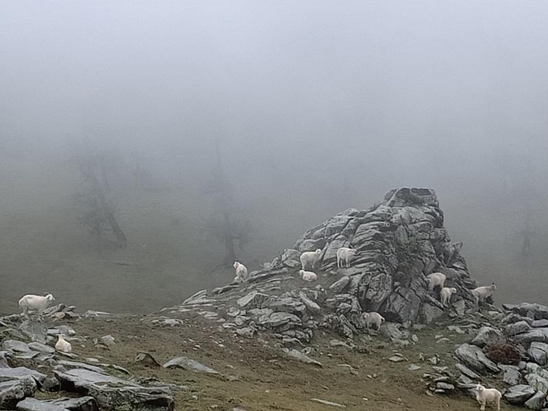 高山牧场的雨雾