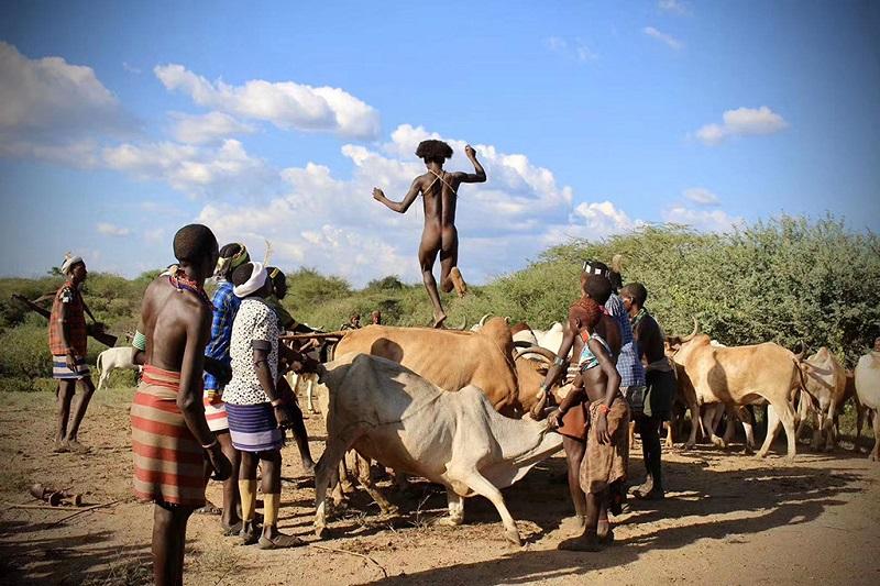 埃国原始部落的跳牛仪式