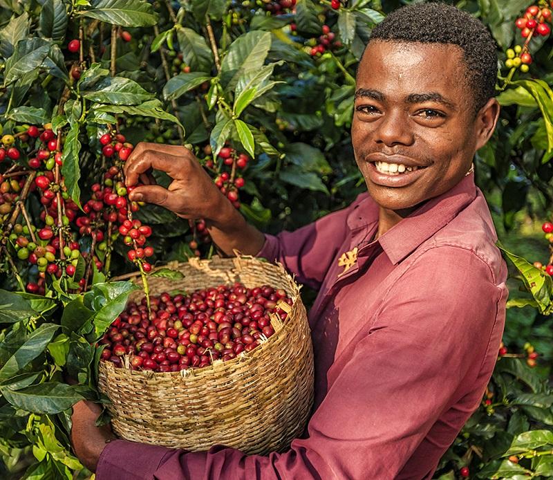 埃塞俄比亚是全球咖啡的原产国