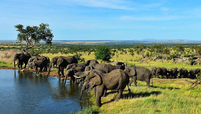 非洲象群在国家公园内喝水