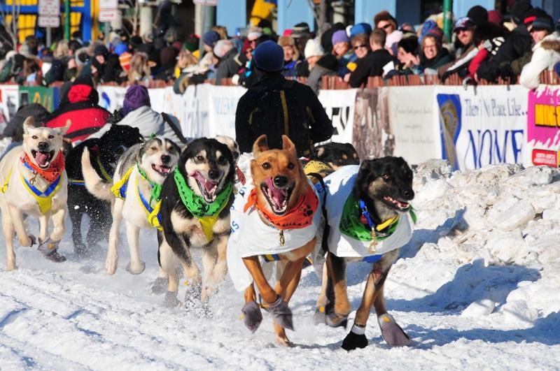 阿拉斯加狗拉雪橇比赛