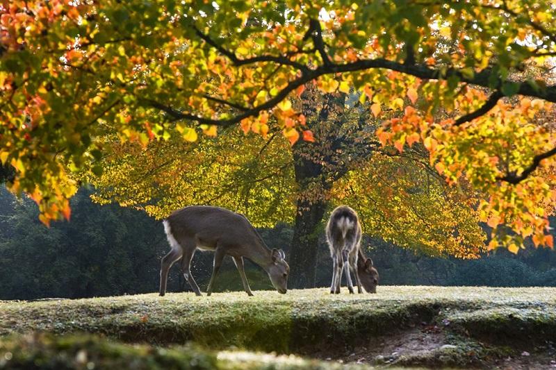 奈良公园秋色