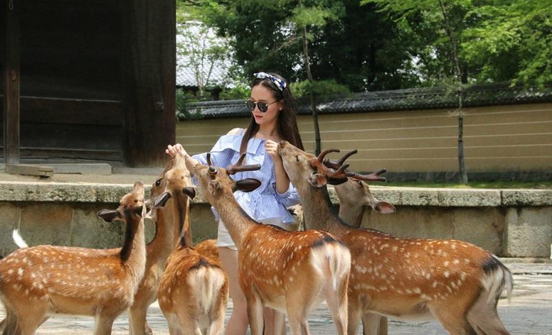 喂鹿的姑娘
