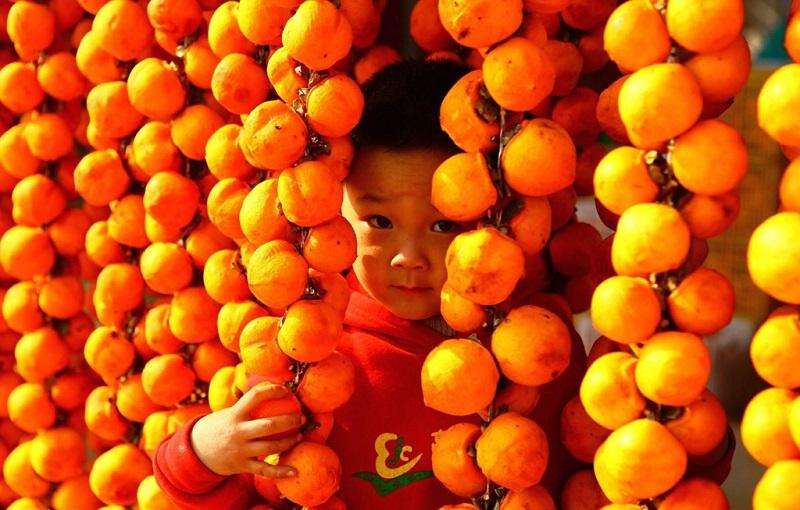柿子之乡的小男孩