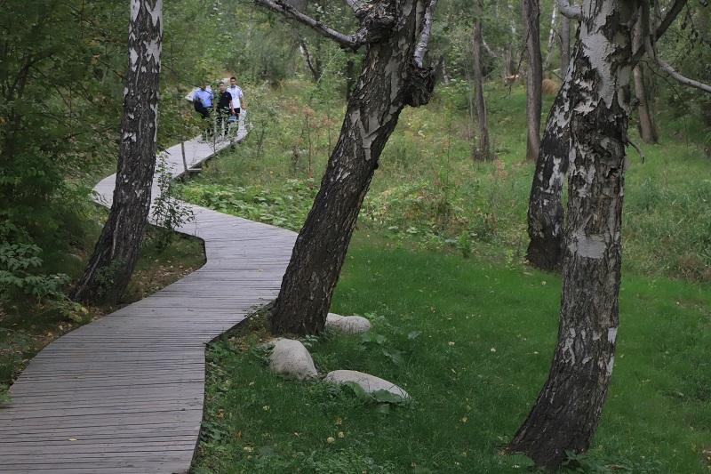 桦林公园里散步的游客