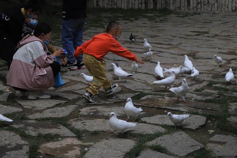 游客在桦林公园给鸽子喂食、玩耍