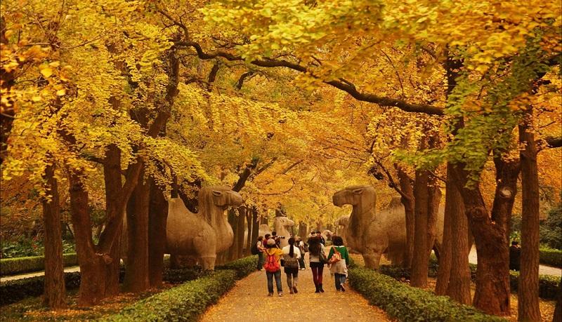 秋日石象路上