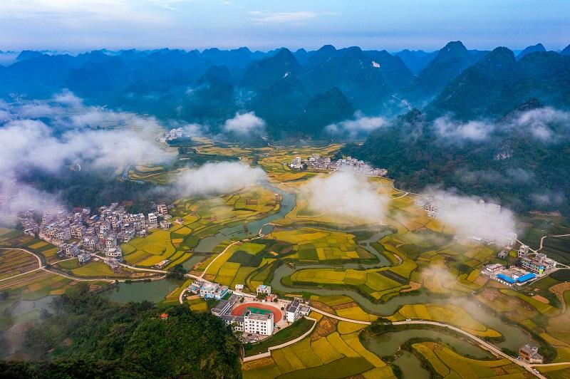 1、2021年10月2日,广西百色靖西市禄垌镇平江村云雾缭绕与一片片金黄色的稻田、民房以及喀斯特地貌相映成趣,成为了这个季节最靓丽的风景线。(何华文)