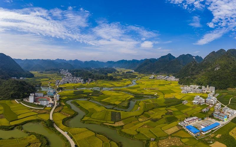 3、2021年10月2日,广西百色靖西市禄垌镇平江村蓝天白云与一片片金黄色的稻田、河流、民房以及喀斯特地貌相映成趣,成为了这个季节最靓丽的风景线。(何华文)
