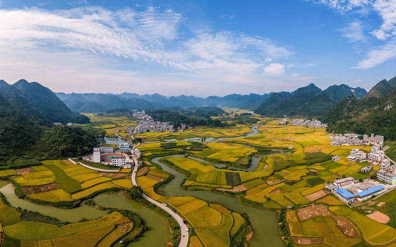 4、2021年10月2日,广西百色靖西市禄垌镇平江村蓝天白云与一片片金黄色的稻田、河流、民房以及喀斯特地貌相映成趣,成为了这个季节最靓丽的风景线。(何华文)