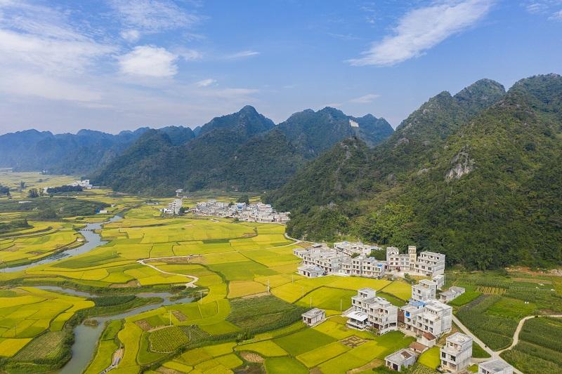 7、2021年10月2日,广西百色靖西市禄垌镇平江村蓝天白云与一片片金黄色的稻田、河流、民房以及喀斯特地貌相映成趣,成为了这个季节最靓丽的风景线。(何华文)