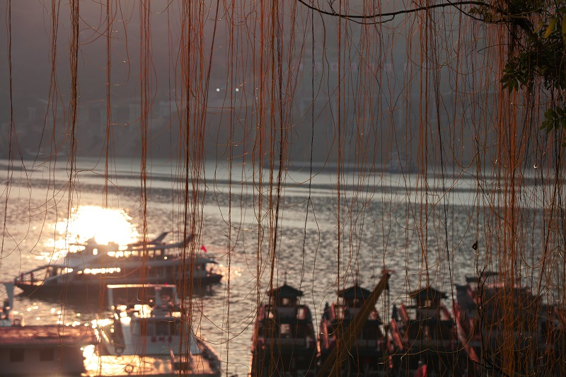 图3:金辉洒满港区垂柳钓画舫如山水画。2021年10月3日,摄于渝东门户巫山港区。唐探峰