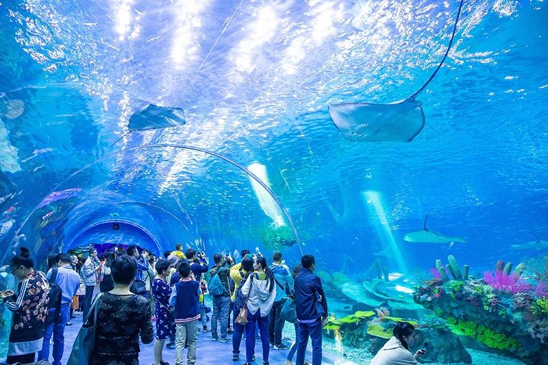 上海海昌海洋公园内