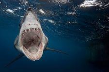 2013年水底世界摄影比赛获奖作品欣赏
