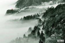 【美丽中国·生态】森林万象